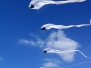 TFS Single Line Kites